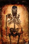 Human Skeleton System On Display At Museum by gargantuen
