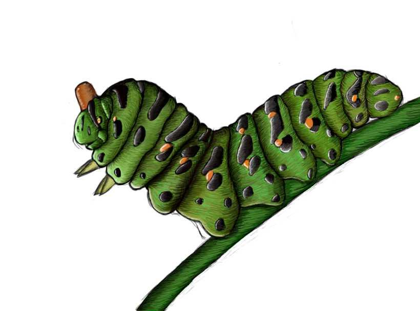 Big Caterpillar by pineapplepidecd92