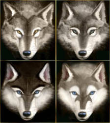 Wolves And Huskies - 4 Faces