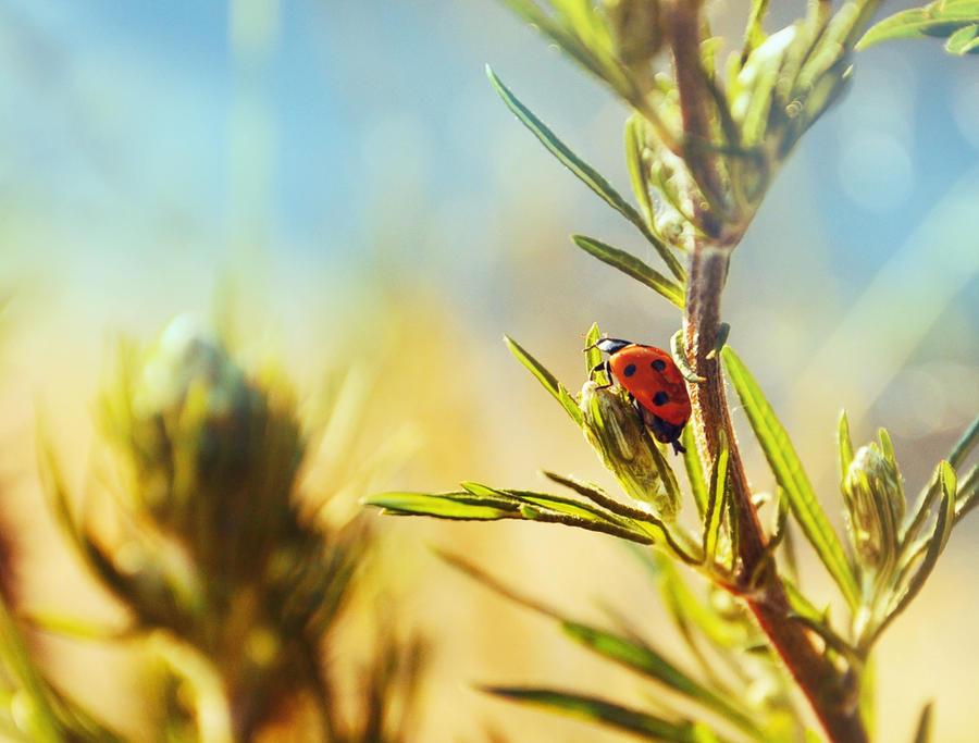 Ladybird by paniparanoja
