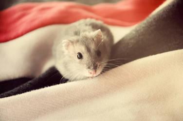 Hamster by paniparanoja