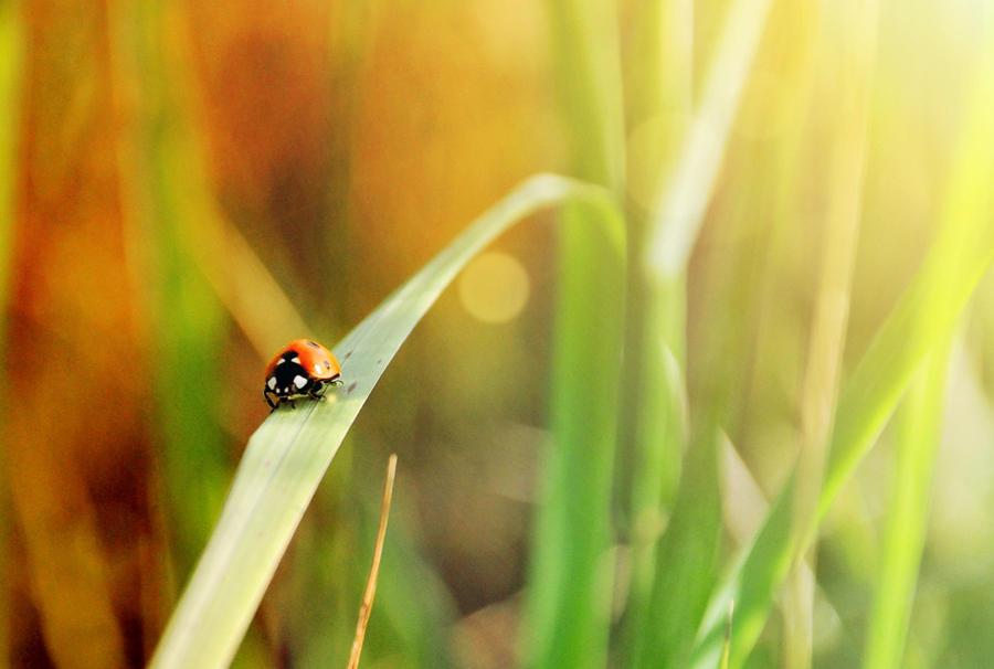 Ladybug by paniparanoja
