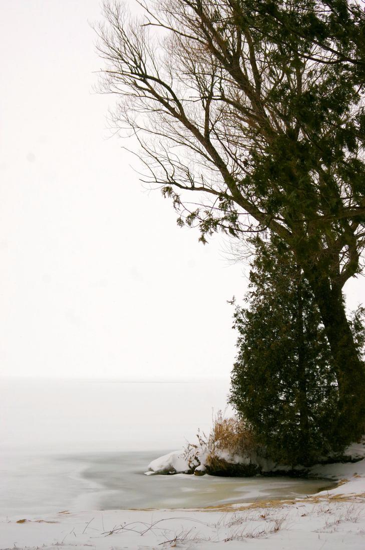 Mighty Tree by iamwhoiam12