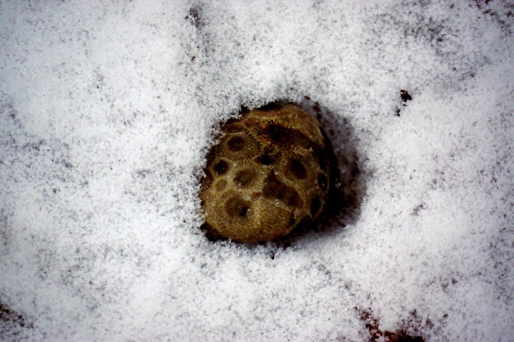 Petosky Stone by iamwhoiam12