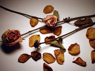 Dried Roses 3 by Mictecacihuatl-Stock