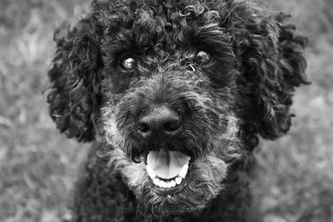 My dog by cazziis