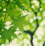 Evergreen by Boku-ga-iru