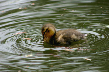 Baby Ripples by GeodeLady