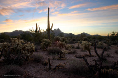 Arizona Desert Sunrise