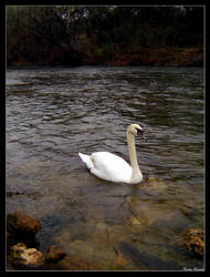 Floating Elegance by GeodeLady