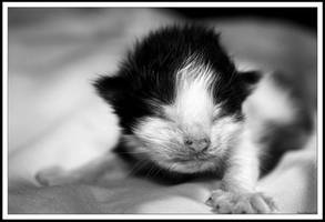 Baby Kitty 2 by GeodeLady