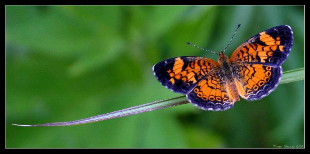 Pearl Crescent by GeodeLady