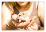 Russian dwarf hamster '3'