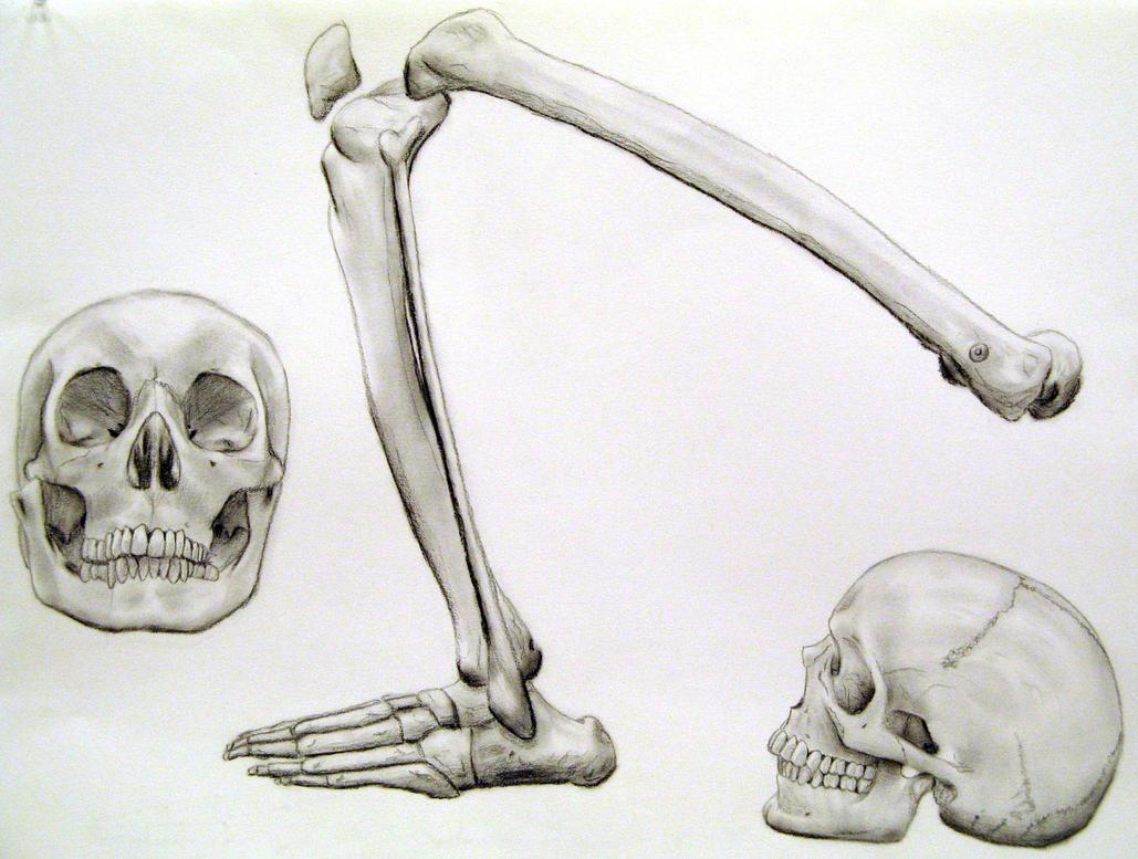 Skeleton Skull And Leg By Katwynn On Deviantart