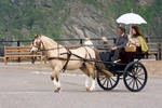 Victorian Horse and Carriage