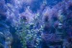 Underwater Sea Stock 2