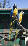 Two Parrots - Stock
