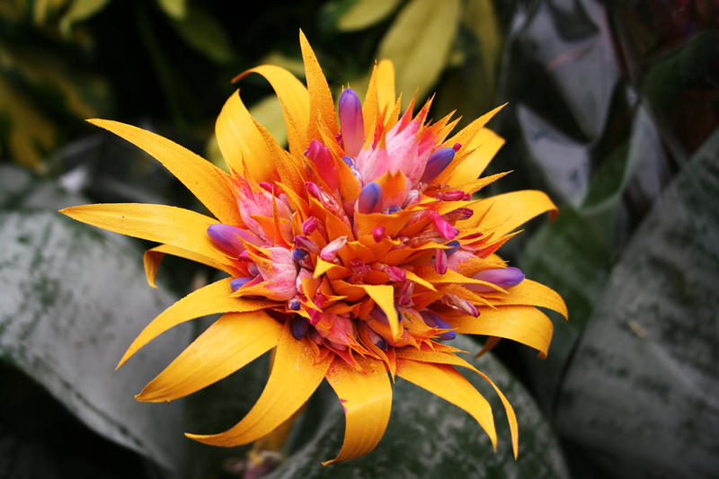 Tropical Flower - Stock by Sassy-Stock