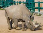 Rhino 4 - Stock