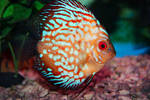 Tropical Fish - Stock