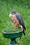 Bird of prey stock