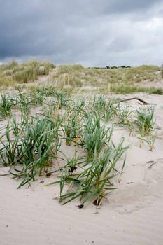 Scottish beach stock 2