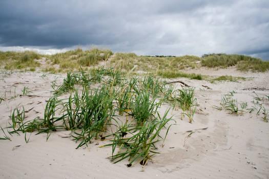 Scottish beach stock 1