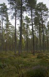 Woodland stock by Sassy-Stock