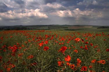 Poppy Field by Sassy-Stock