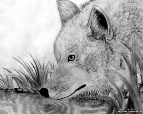 Coyote's Refreshment