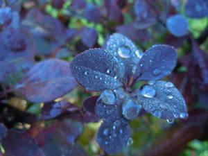 after rain by VasiDragos