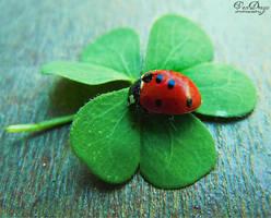 Ladybug by VDragosPhotography