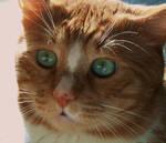My curious cat by VasiDragos