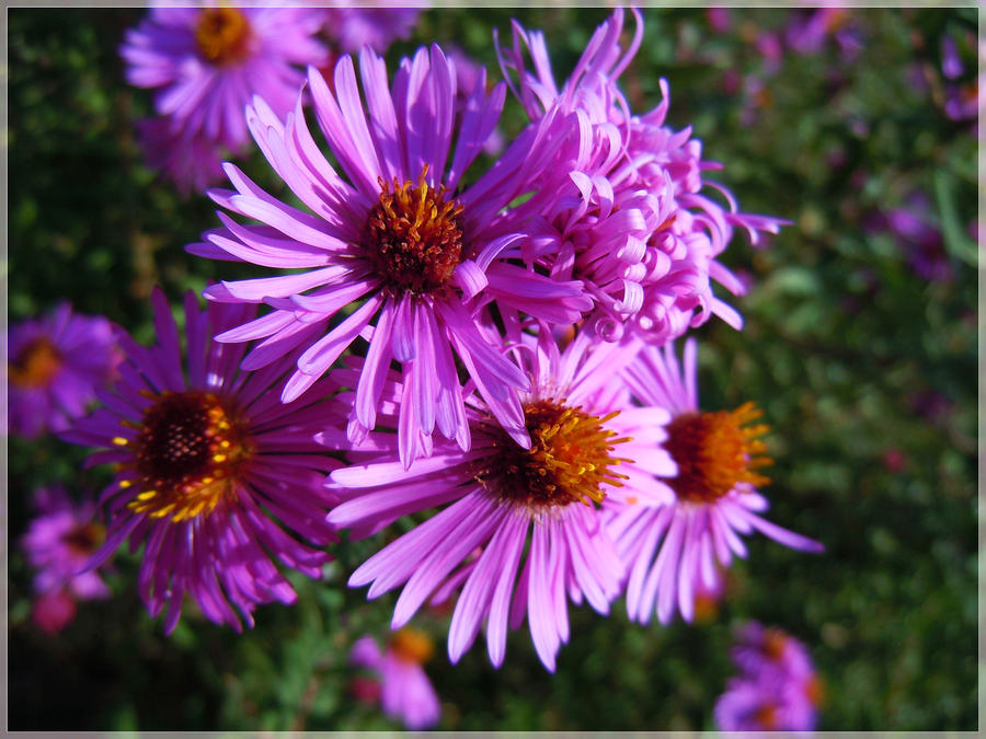 Flowers make me happy by VasiDgallery