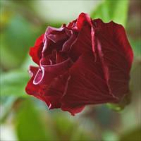 Arhul flower by VDragosPhotography