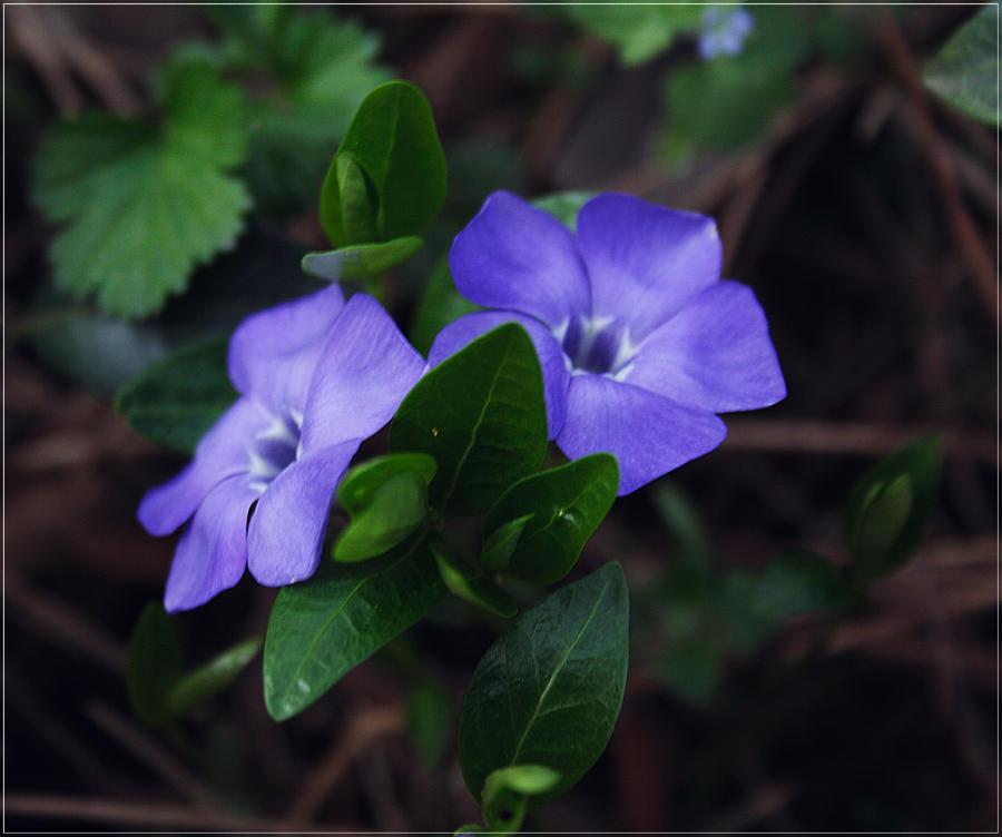 Violet love by VasiDgallery