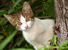 Hypnotic kitty by VDragosPhotography