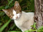 Hypnotic kitty