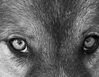 .. those eyes .. by VasiDragos