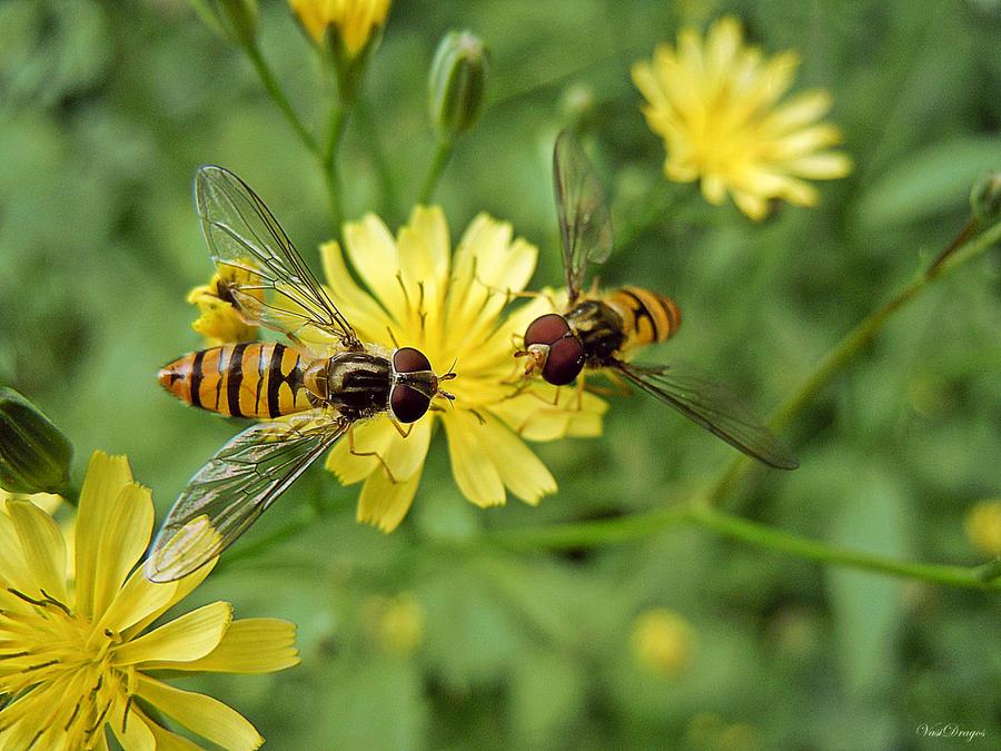 Summer glory - golden bee by VasiDgallery