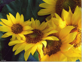 For the love of sunflowers by VDragosPhotography