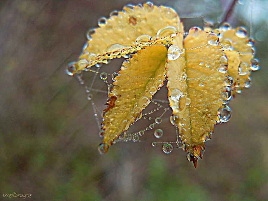 . last leaf . by VasiDgallery