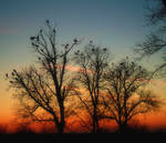 Storks at sunset by VasiDragos