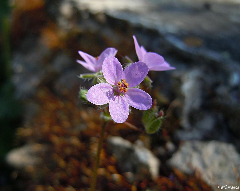 Violet by VasiDgallery