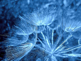 Magical Blue by VDragosPhotography