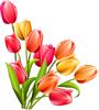 bouquet by VasiDragos