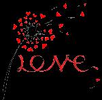 dandelion love by VDragosPhotography
