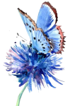 paint butterfly
