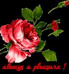 a pleasure rose
