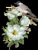 Bird On Flower by VDragosPhotography